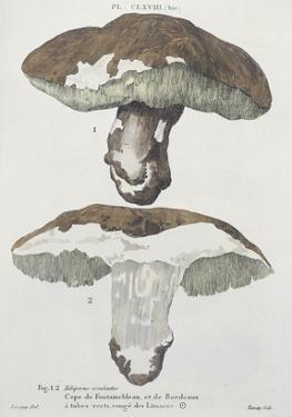 Tubiporus Esculentus, Plate 168 from 'Iconographie Des Champignons De J.J. Paulet' by De Lussigny