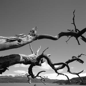 Dead Branches with Lake and Mountains