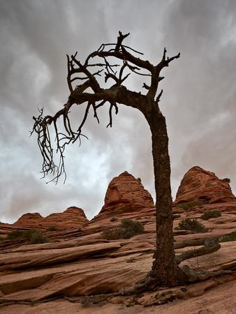 https://imgc.allpostersimages.com/img/posters/dead-evergreen-tree-and-sandstone-mounds_u-L-PWFRW20.jpg?artPerspective=n