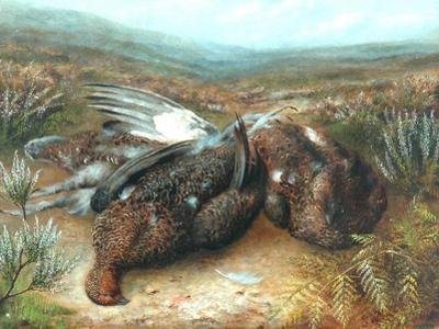Dead Grouse in Landscape