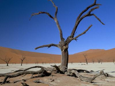https://imgc.allpostersimages.com/img/posters/dead-vlei-sossusvlei-dune-field-namib-naukluft-park-namib-desert-namibia-africa_u-L-P1U0AJ0.jpg?p=0