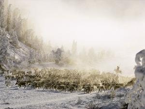 Reindeer Course Through a Siberian Valley by Dean Conger