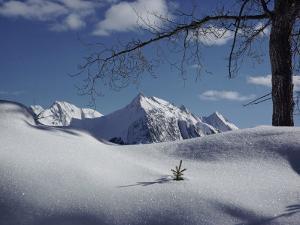 Winter Scene Inside Jasper National Park by Dean Conger