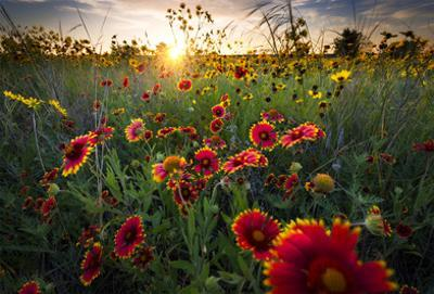 Breezy Dawn Over Texas Wildflowers by Dean Fikar