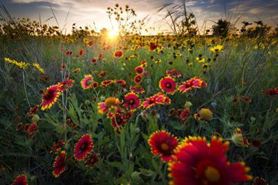 Breezy Dawn over Texas Wildflowers by Dean Fikar