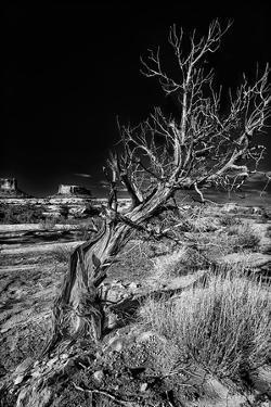 Solitary Tree in the Utah Desert by Dean Fikar
