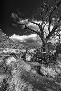 Stormy Day near Abique by Dean Fikar