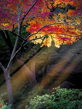 Sun Rays Peeking through Fall Foliage by Dean Fikar