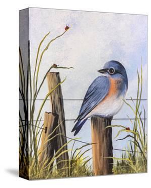 Bluebird by Debbi Wetzel