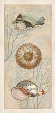 Ocean Companions II by Deborah Devellier