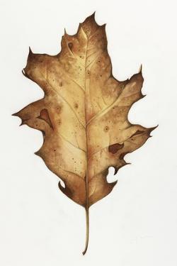 Black Oak Leaf by Deborah Kopka