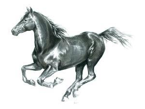 Gallop Black by Deborah Pearce
