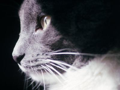 Portrait of a Cat by Debra Cohn-Orbach