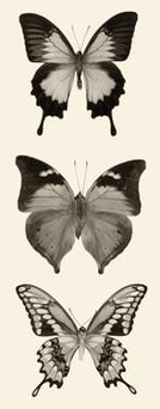 Butterfly BW Panel I by Debra Van Swearingen