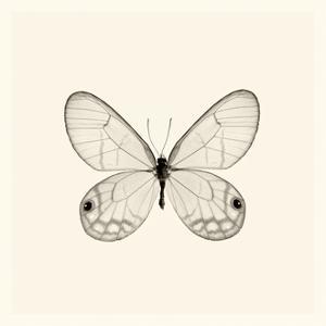Butterfly I BW Crop by Debra Van Swearingen
