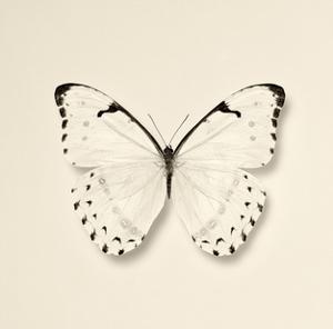 Butterfly II BW Crop by Debra Van Swearingen