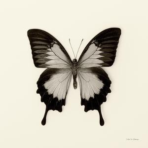 Butterfly III BW Crop by Debra Van Swearingen