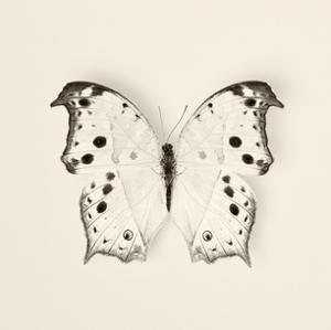 Butterfly IV BW Crop by Debra Van Swearingen