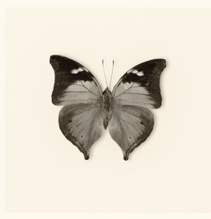 Butterfly VII BW Crop by Debra Van Swearingen