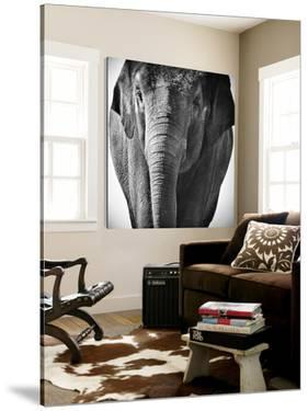 Elephant I by Debra Van Swearingen
