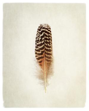 Feather I by Debra Van Swearingen