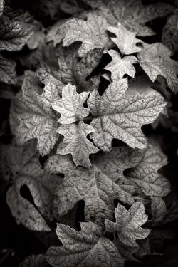 Hydrangea Leaves in Black and White by Debra Van Swearingen