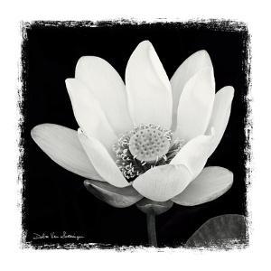 Lotus Flower I by Debra Van Swearingen