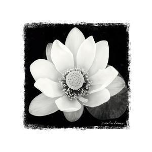 Lotus Flower II by Debra Van Swearingen