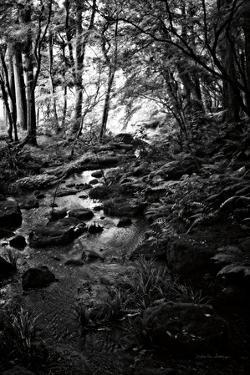 Lush Creek in Forest BW by Debra Van Swearingen