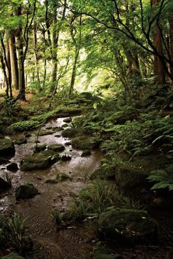 Lush Creek in Forest by Debra Van Swearingen