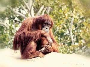 Orangutan by Debra Van Swearingen