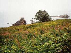 Oregon Coast by Debra Van Swearingen