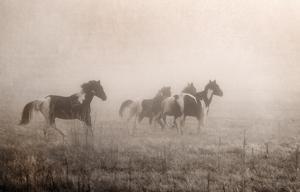 Paint Horses on the Run by Debra Van Swearingen