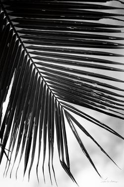 Palm Frond II by Debra Van Swearingen