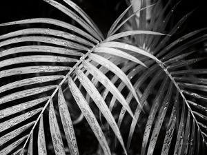 Palm Fronds by Debra Van Swearingen