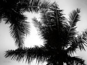 Palm Tree Looking Up I by Debra Van Swearingen