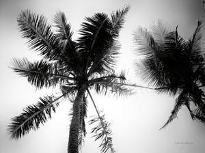 Palm Tree Looking Up II by Debra Van Swearingen