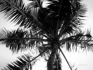 Palm Tree Looking Up III by Debra Van Swearingen