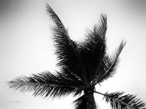 Palm Tree Looking Up IV by Debra Van Swearingen