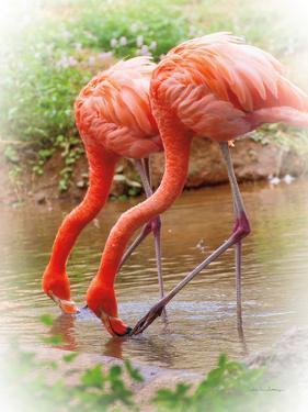 Two Flamingos by Debra Van Swearingen
