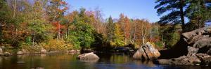 Deciduous Trees along Moose River, Adirondack Mountains, Adirondack State Park, New York, USA