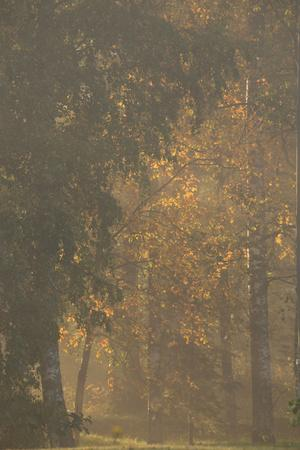 https://imgc.allpostersimages.com/img/posters/deciduous-trees-in-sunny-and-foggy-morning_u-L-Q1EXVQ10.jpg?artPerspective=n