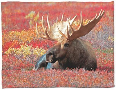 Bull Moose in Denali National Park, Alaska, USA by Dee Ann Pederson