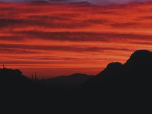 Sonora Desert, Saguaro National Park, Arizona, USA by Dee Ann Pederson