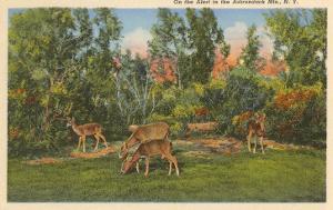 Deer, Adirondack Mountains, New York