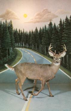 Deer in Headlights, Retro