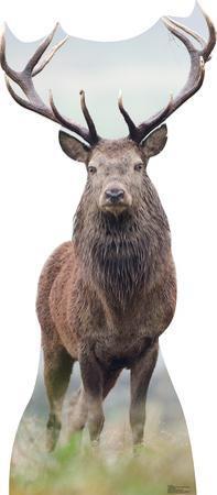 Deer Lifesize Standup