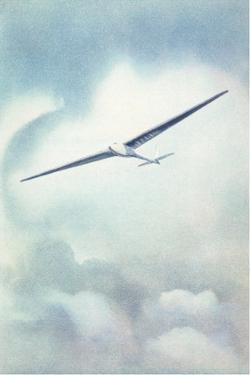 Delicate Glider