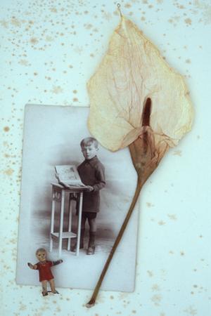 Arum Lily by Den Reader