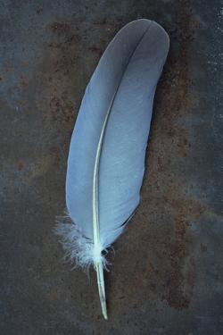 Feather Grey by Den Reader
